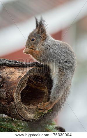 Squirrel Treasure Place
