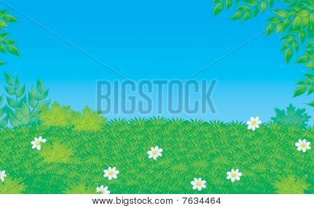 Clareira verde