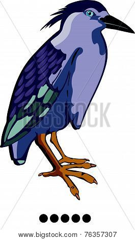 Night Heron Or Nycticorax Sp., Illustration