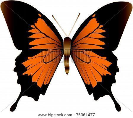 An Illustration Of A Butterfly.
