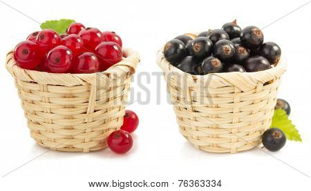 red and black currants berry on white background