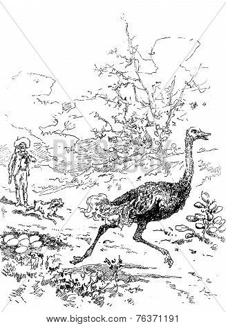 Narcissus Nicaise Perilous Adventures In The Congo. Pierrot Barked Against A Large Ostrich, Vintage