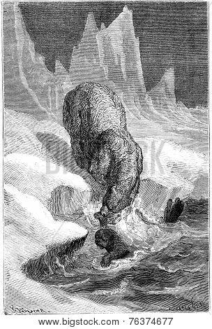 Polar Bears Hunting Seals, Vintage Engraving.