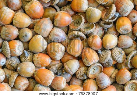 Texture, Background Made Of Multiple Acorns