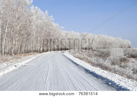 road and hoar-frost on trees in winter