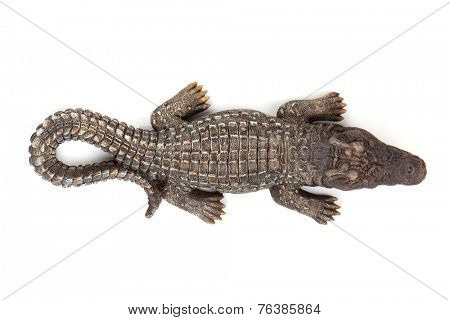 Wildlife crocodile open mouth. Isolated on white background