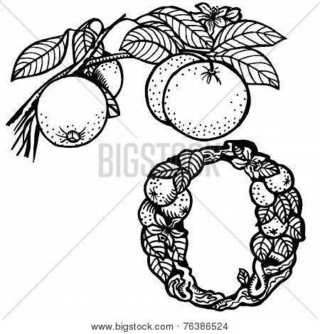 orange branch litera O