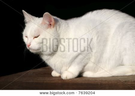 White Cat Sitting On The Wooden Stairs