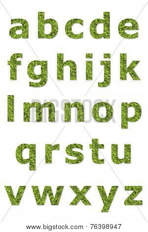 Lower Letter Of Green Lichen