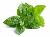 stock photo of peppermint  - Peppermint leaves - JPG