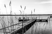 image of tall grass  - Silhouette pier for pleasure and fishing boats on shore of Lake Ladoga in Karelia - JPG