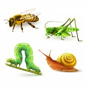 picture of green caterpillar  - Insects realistic colored decorative icons set with wasp grasshopper caterpillar snail isolated vector illustration - JPG