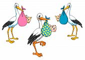 foto of stork  - Cartoon storks carrying little newborn babies for delivery boy and girl - JPG
