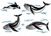 stock photo of hump  - Cartoon vector sea whales with swimming baleen whales and an orca with small ocean waves - JPG