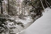 stock photo of blanket snow  - Wilderness stream and forest blanketed in fresh fallen snow - JPG