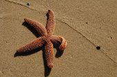 stock photo of martha  - starfish on sand with sea foam line on martha - JPG