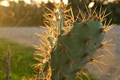 stock photo of spiky plants  - Close - JPG