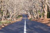 picture of tar  - Scenic residential road lined with trees with new asphalt tarred surface and white line - JPG