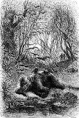 foto of encounter  - Encounter an elephant eats by vultures vintage engraved illustration - JPG