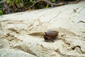 stock photo of hermit  - Side View of Small Hermit Crab Walking on Sand - JPG