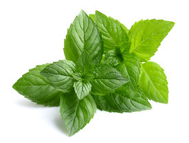 picture of peppermint  - Peppermint leaves - JPG