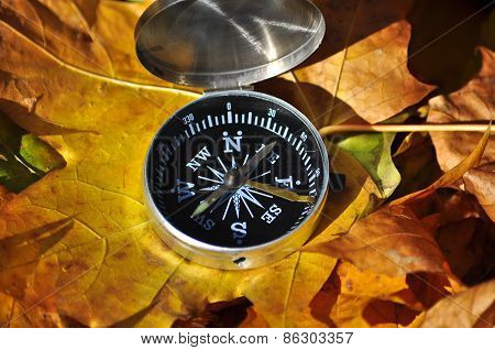 Compass In Fallen Leaves.