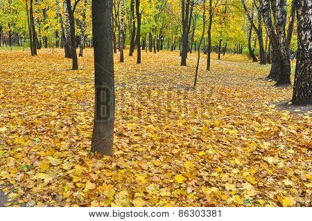 Autumn Park In Fallen Leaves.