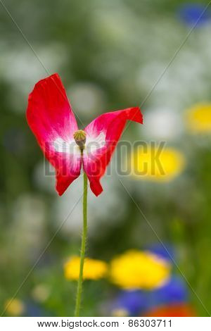 A lonely red flower in the garden