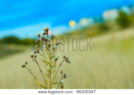 Meadow Wild Flowers On Blurred Background