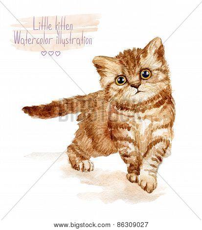 Little fluffy red kitten