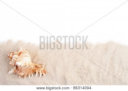 Spiral seashell on the sand and white copy space