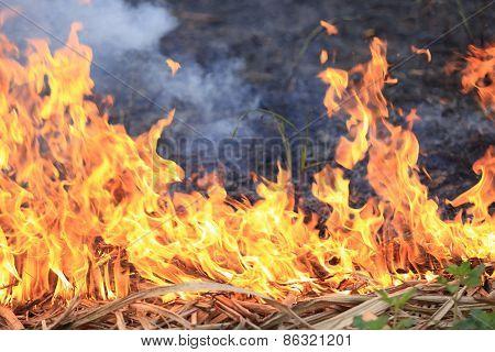 beautiful burning fire flame