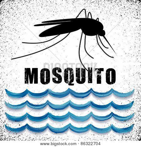 Mosquito, Standing Water