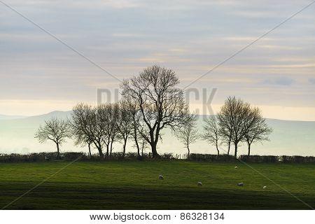 Trees, Cumbria, England