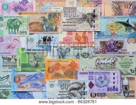 Animals On Money.