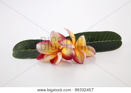 frangipani with leaf on the white background