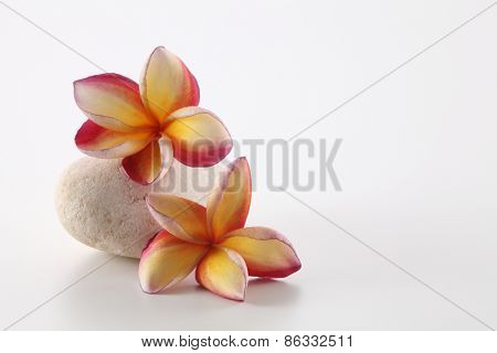 frangipani on top of the stone