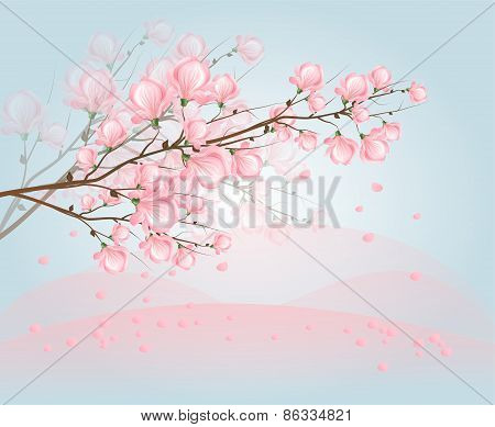 Light Pink Magnolia Blossom On Sky