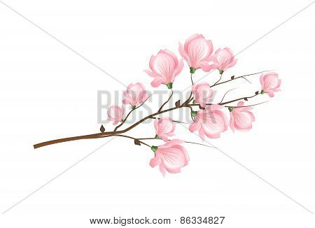 Light Pink Magnolia Blossom