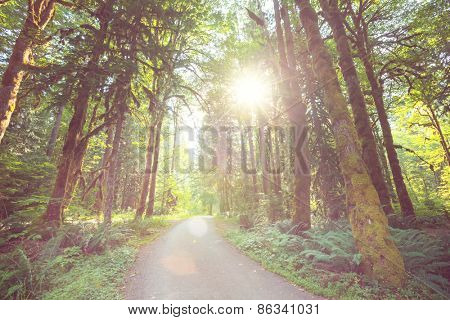 Green sunny  forest