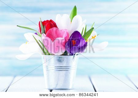 Beautiful spring flowers in metal bucket on color background