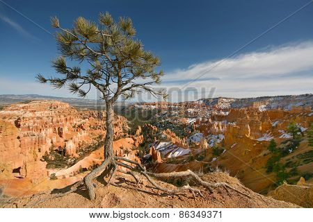 Tree on rim trail Bryce Canyon