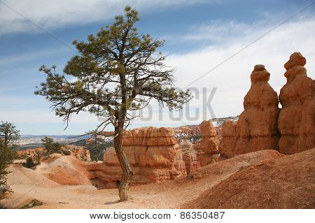 Tree in canyon within Bryce Canyon