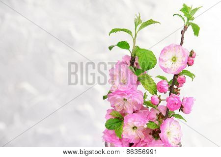 Beautiful fruit blossom on grey background