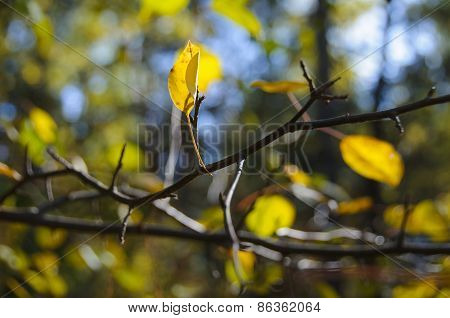 Yellow Leaf On Bare Tree Branch