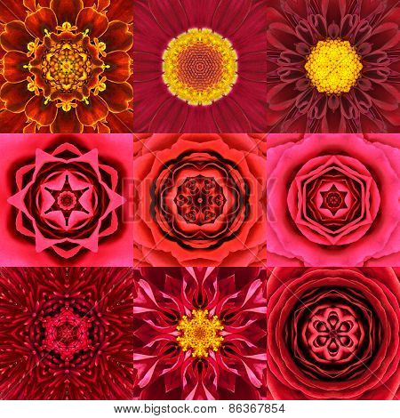 Collection Of Nine Red Concentric Flower Mandalas Kaleidoscope
