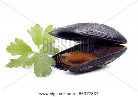 One Open Mussel And Coriander