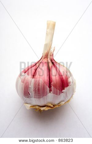 Bulb of Garlic.