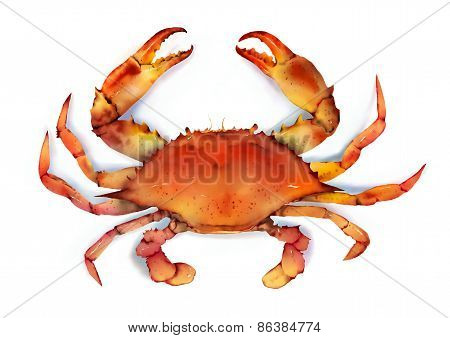 Red Boiled Crab Isolated Illustration