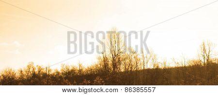skyline with trees orange hue